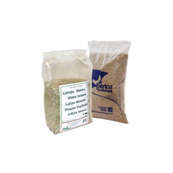 lechuga-blanca-extra-manitoba-1kg