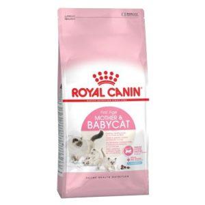 royal canin bebes de gato.